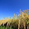 あなたはこの秋 何を収穫しましたか?の画像
