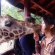 キリンとキスしました…