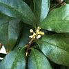 秋の気配と不思議な植物(≧▽≦)ノの画像