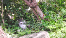 柿の木の下 2号