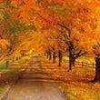秋のフェイシャルキャ…