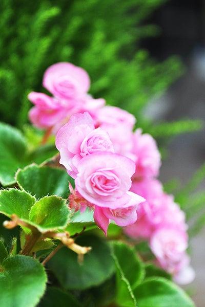 140930_Flower2