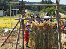 2014092728稲刈りツアー21桟掛け子供
