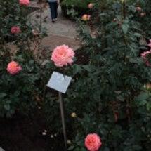 神代植物公園のバラの…