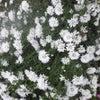 庭の花が満開の画像