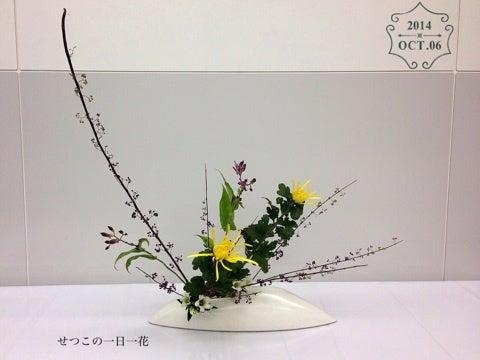 セツコの一日一花】「紫式部と菊」@池坊のお稽古