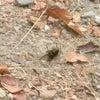 ハチとの遭遇の画像