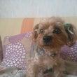 愛犬 チェン