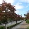 紅葉が始まりましたね♪の画像