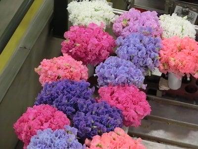 生花市場1