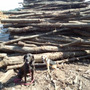 良い薪にはいい原木だ…