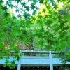 日向大神宮の画像