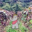 山ぶどう収穫体験