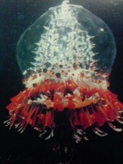 ウルトラマンレオの怪獣・円盤生物シルバーブルーメについて