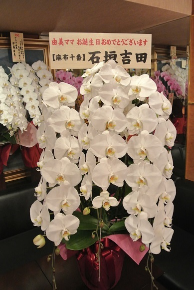 銀座クラブ由美 石垣吉田より胡蝶蘭