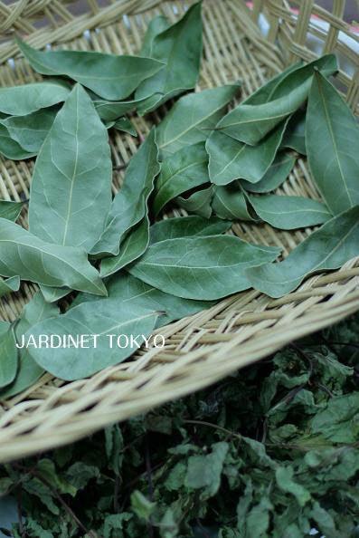 ローレル ベイリーフ 月桂樹 画像
