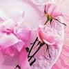 ◆今年のクリスマスケーキは(*^_^*)の画像