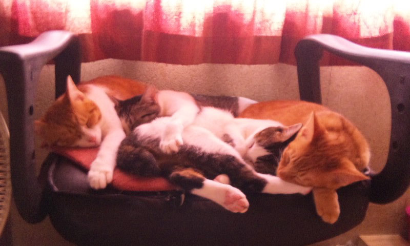 実家の猫ちゃん達 その2