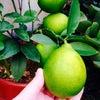 パオパオ菜園観察記の画像