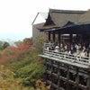 京都散策の画像