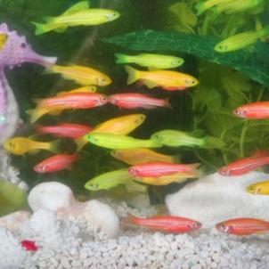 「Fish」癒し~の画像