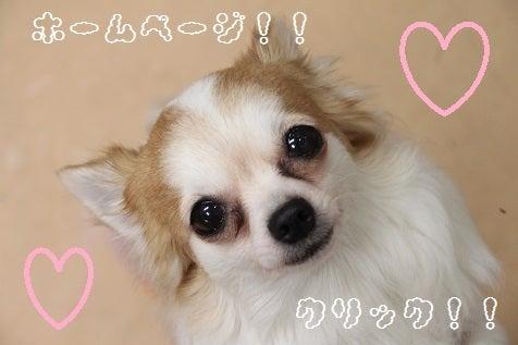 DOGsalon Pang ホームページ☆