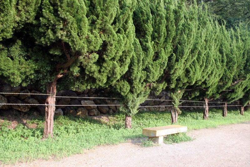 加納城/⑨本丸西側の石垣は垣根に覆われている