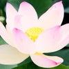 秘すれば花の画像