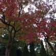 紅葉とタイムトラベル