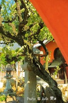京都 妙応寺