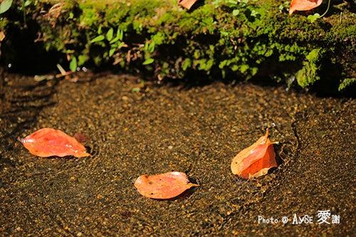 京都 天智天皇山科陵の水路