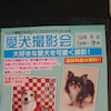12月6日愛犬撮影会予約受付中の画像