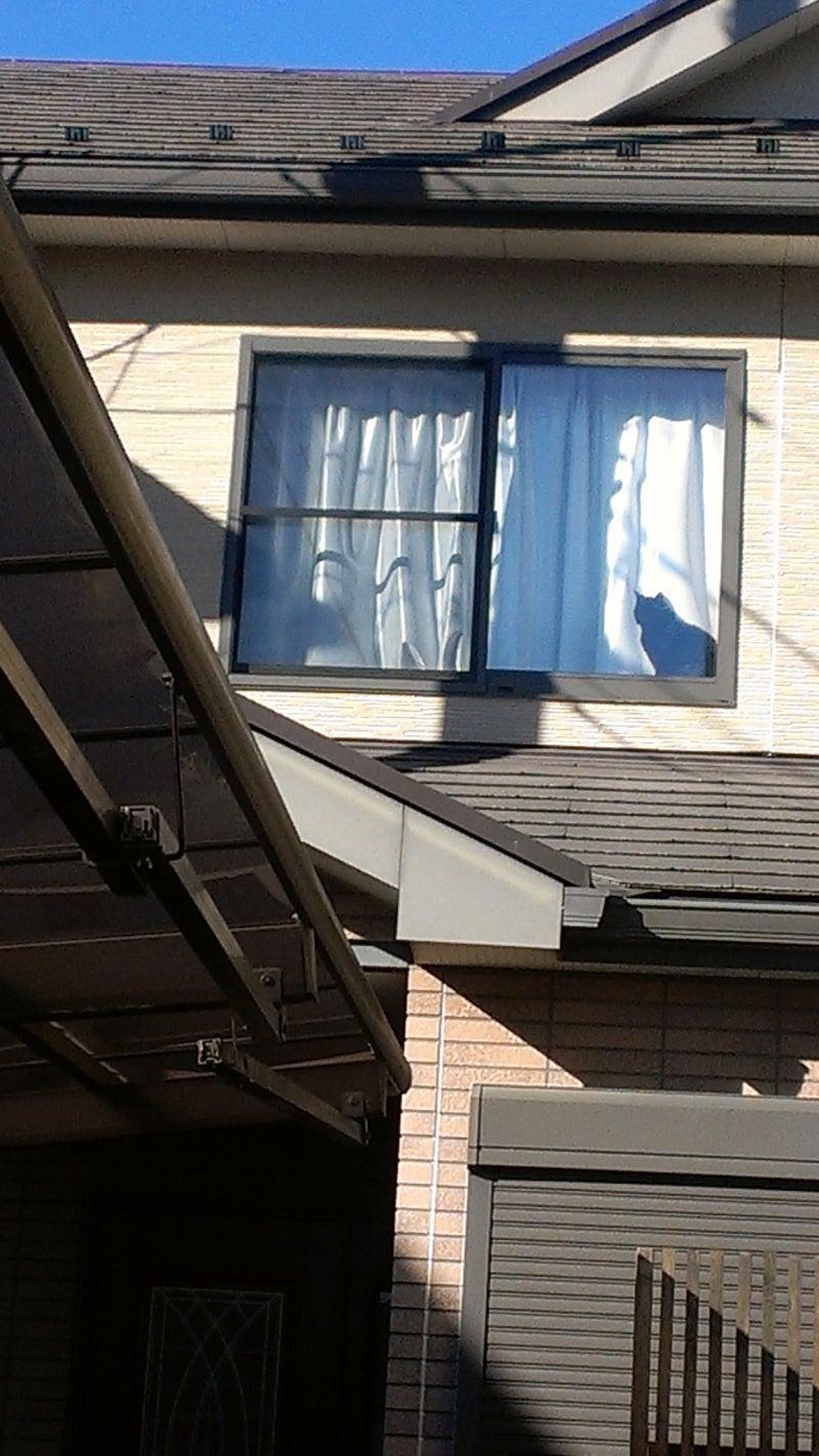 窓辺で日向ぼっこするピンキー