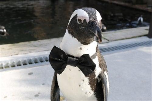 ペンギン+結婚式=最強