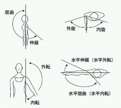 肩関節 動き に対する画像結果