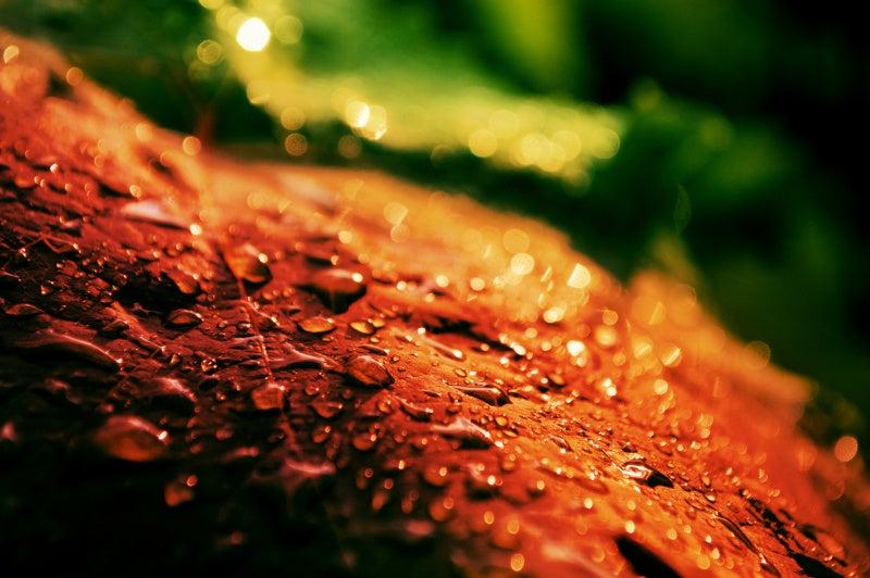 落ち葉と水滴