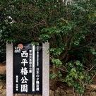 天草観光 これはすごい!『天草椿油』~樹齢300年以上のやぶ椿から搾油の記事より