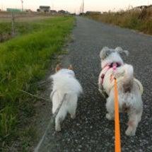 みんなの散歩道