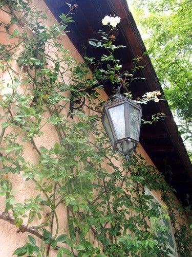 薔薇の壁と街灯01