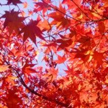 ぽてぽて秋散歩