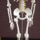 股関節の位置の勘違い ~もうちょっと内側ですよ~の記事より