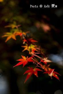 嵐山 宝厳院