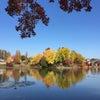 秋の散歩道の画像