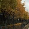 紅葉。の画像