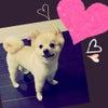 愛犬の画像