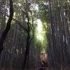 嵐山の画像