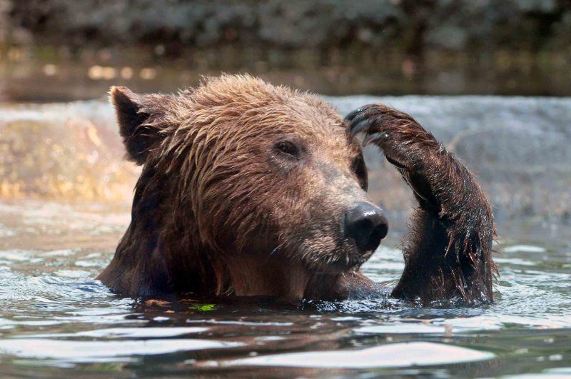 お風呂中のクマ