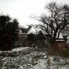 雪が降りました!の画像