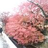 京都に行ってきました(*^O^*)②の画像
