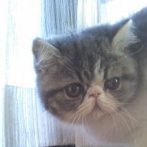仔猫産まれたよ(旅立…